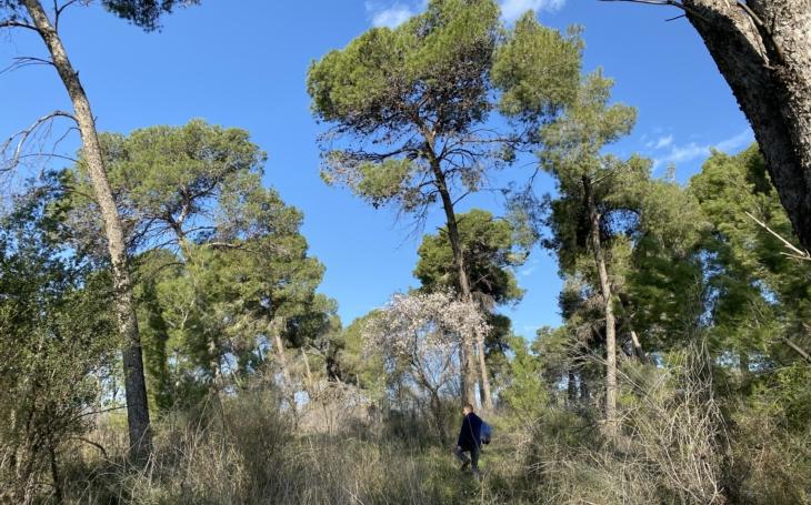 Na počest TGM jsme zasadili strom. Masarykův les v Izraeli dožívá, na obnovu je nejvyšší čas, vyzývá MENDELU