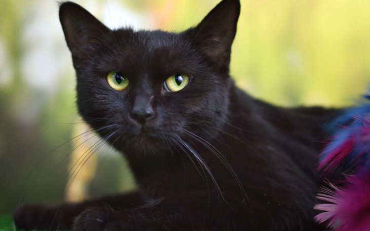 Přátelský mazel, číča Fátima, i ostatní opuštěná zvířátka i teď potřebují vaši pomoc a lásku. Koronavirus zasáhl i útulky