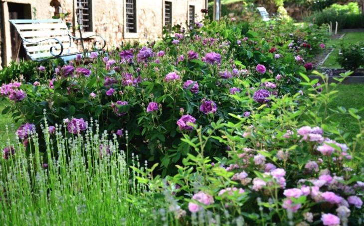 Jak sněhové koule vyrůstají z karmínově růžových poupat… Zámecké zahrady jsou pastva pro oči i nos, třeba nádherné růže v Nebílovech. Musíte jen trochu švindlovat