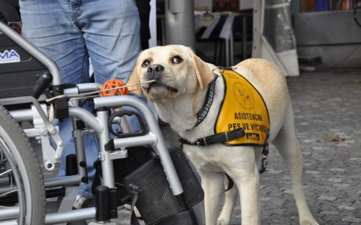 Mají se rádi navzájem, psi i lidé. Léčení psí láskou v Domě sociálních služeb Na Neklance