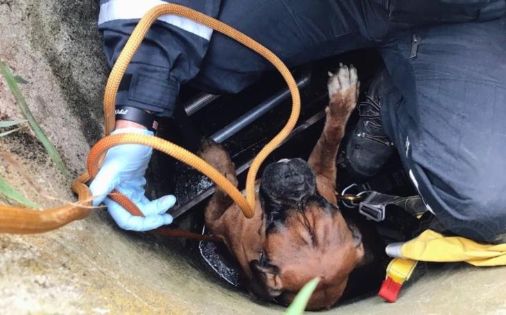Kotě, dva psi a ´smrtelně nebezpečná´ užovka. Jen v červenci měli hasiči z Pardubicka co dělat více s domácími mazlíčky, než s požáry