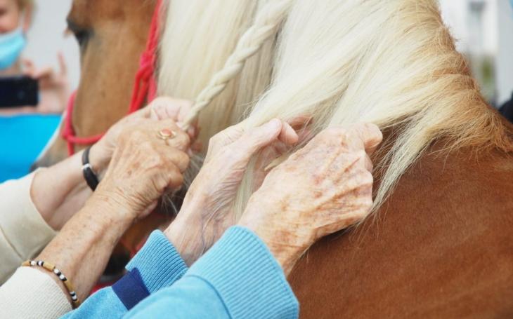 Pojď ke mně, pohladím tě. Děkuji, že jsi mě navštívil. V Olomouci domovy pro seniory navštěvují… koně