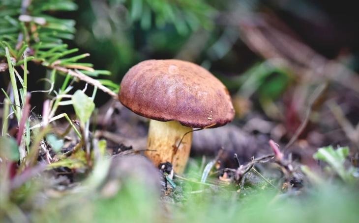Z lesa to vezměte rovnou přes mykologickou poradnu. Otrava z hub je raz dva