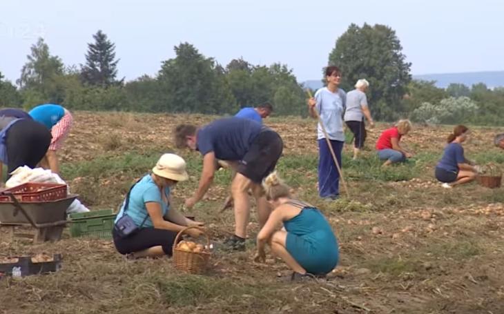 Našli zemědělci bič na nenažrané obchodní řetězce? Čeští farmáři sázejí na samosběr a lidé na to slyší. 5x pátek Pavla Přeučila