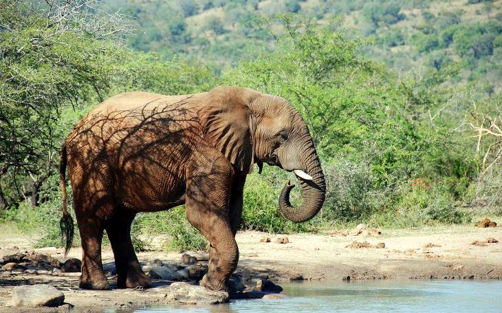 Když na vás zaútočí rozzuřený slon. S cestovatelem Milošem Beranem potřetí do Jihoarfické republiky