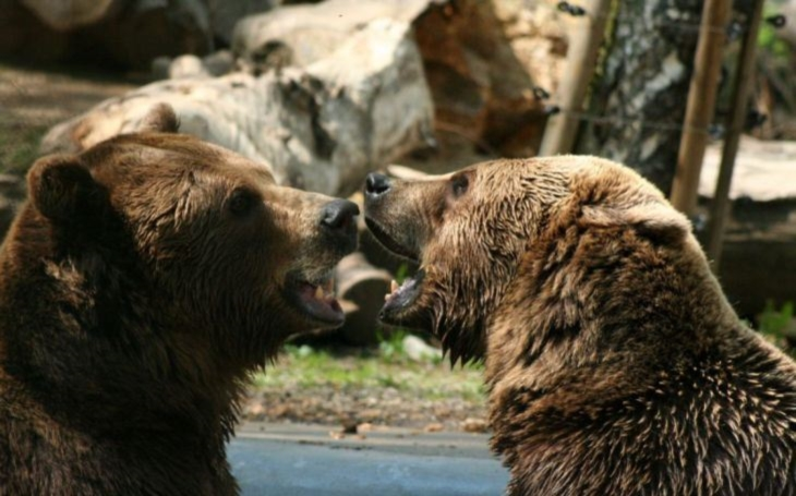 Brum, brum, brum, o čem se zdá medvědům… Testováno na dětech