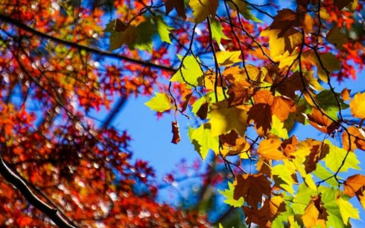 Máte rádi podzim?