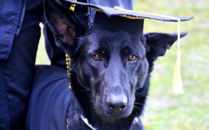 Pomoc přichází na čtyřech tlapkách… Super den 2020 a promoce asistenčních psů se blíží