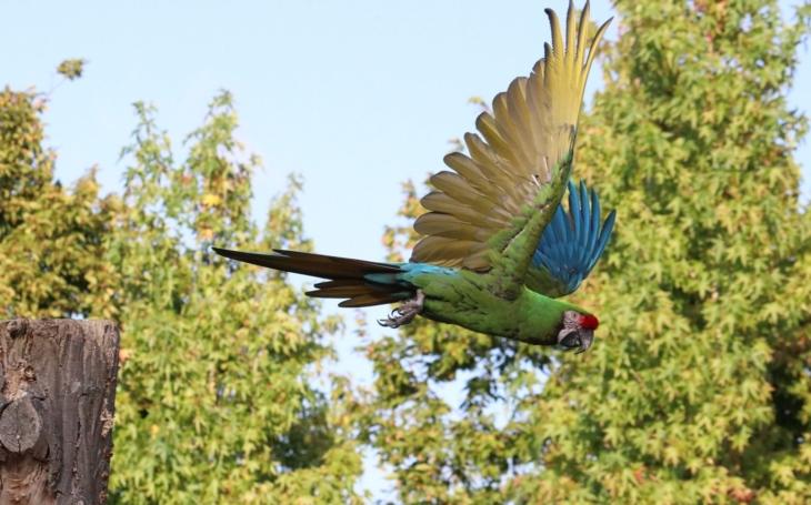 Práce kvapná málo platná? Sněmovnou prošel spolu se slepicemi zákaz volného létání papoušků, čímž končí srazy chovatelů i ukázky na výstavách