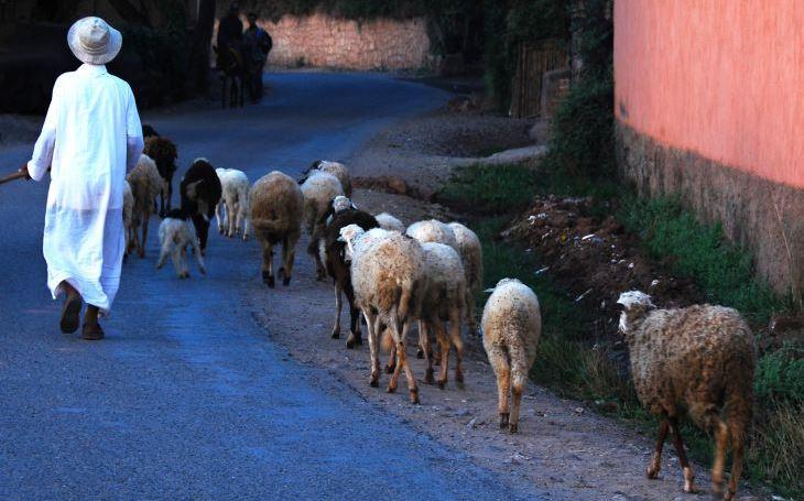 Rozeklané pohoří, hluboké soutěsky a stráně s hliněnými domky. S cestovatelem Milošem Beranem pošesté do Maroka
