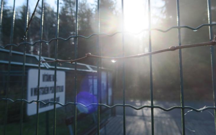 V množírně na Královéhradecku pobíhalo v hrozné špíně 72 pejsků, dokud nezasáhla policie. Více než 600 lidí má o ně zájem