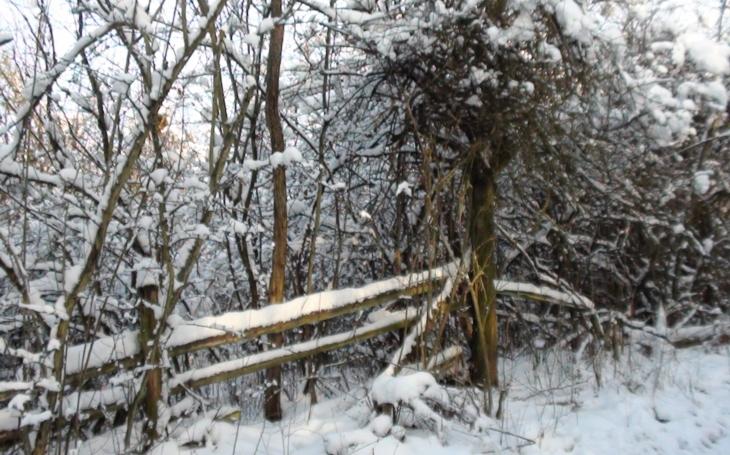 Vzpomínka na legendární ´uhelňáky´ v zimě roku 1979. Glosa Iva Fencla
