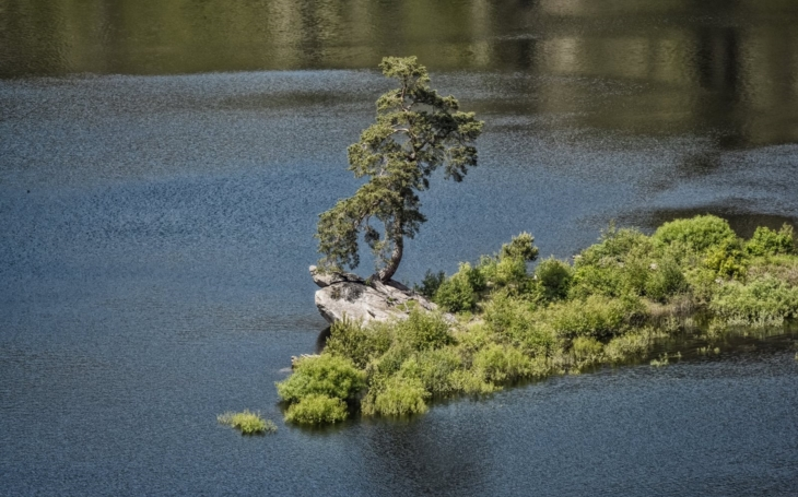 Chudobínská borovice, která vypadá z dálky jako bonsaj uprostřed přehrady, vyhrála na celé čáře Evropský strom roku. Poprvé zvítězil český strom