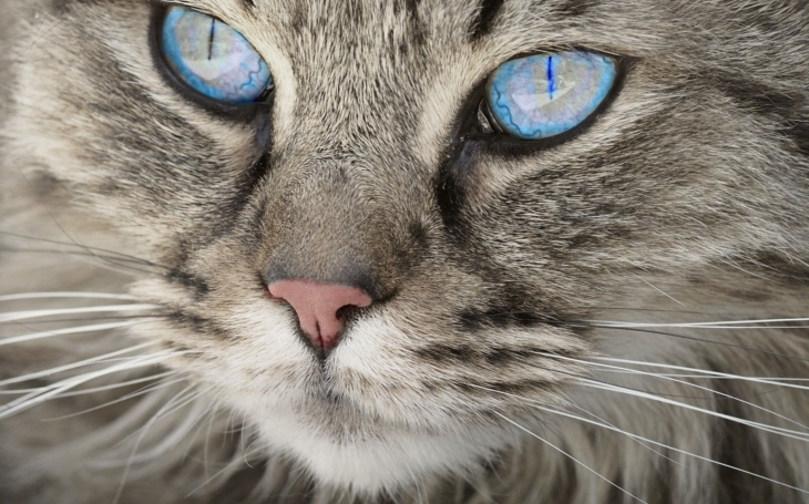 Žít podle citátů by dopadlo tristně. Třeba... Člověk je kulturní v té míře, v jaké rozumí kočce (G. B. Shaw). Glosa Iva Fencla