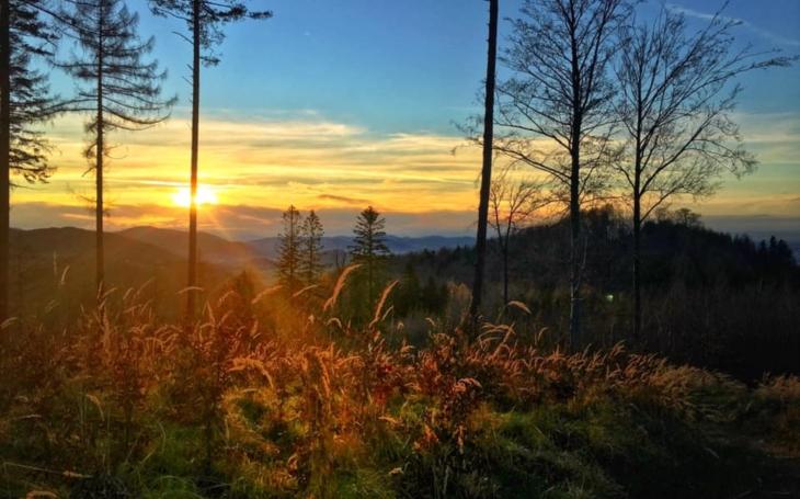 RECENZE Uvidíme ještě růst nový les a ucítíme jeho vůni? Odpoví nový román Aleše Dostála