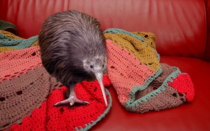 Měl jsem doma na víkend kiviho. Příště snad radši vyhořet. Nebo si vzít lenochoda. Zlínská Zoo začala půjčovat zvířata do domácí péče