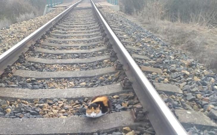 Zraněná kočička ležela dva dny v kolejišti, než ji zachránil všímavý strojvedoucí. Příběh o dobrých lidech zatím nemá šťastný konec