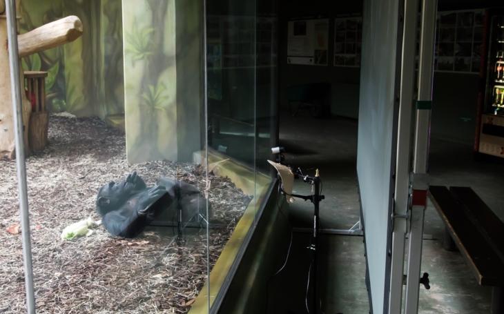 Co ty lidi za sklem či plotem sežralo? Uzavření Zoo kvůli covidu bylo pro zvířata šok, vyšlo najevo, že se bez lidí nudí a nemají na co koukat