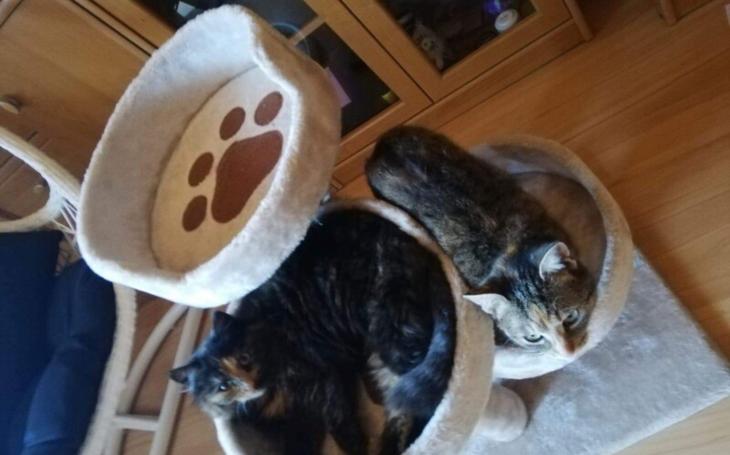 Napínavý souboj o škrabadlo pro kočky, cena vylétla z 50 na 305 korun. Stát draží leccos, třeba i bitcoiny, za půl milionu, nebo sadu berlí za korunu