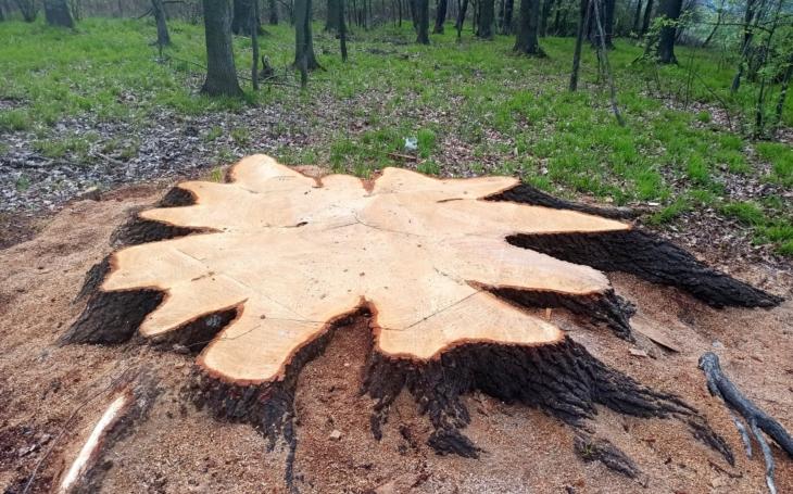 Vražda starého stromu. V noci tý černý nejtmavší. Glosa Iva Fencla