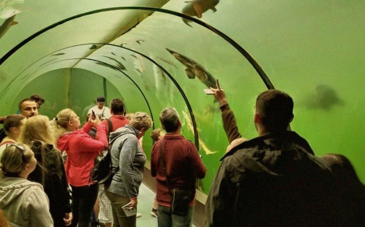 Trochu Živé vody na karanténami umořenou Českou republiku. Otevírá se, k vidění je i největší sladkovodní ryba na světě