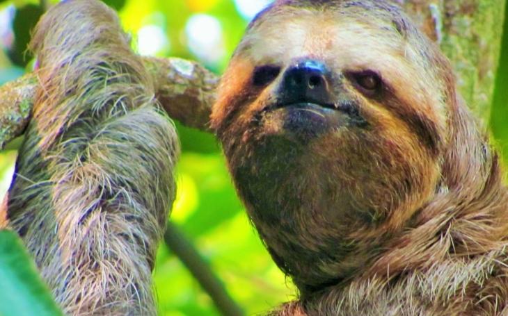 Děsivý amazonský mapinguari svým obětem ukusuje hlavy. Nový seriál záhadologa Slámy Dobře utajené příšery