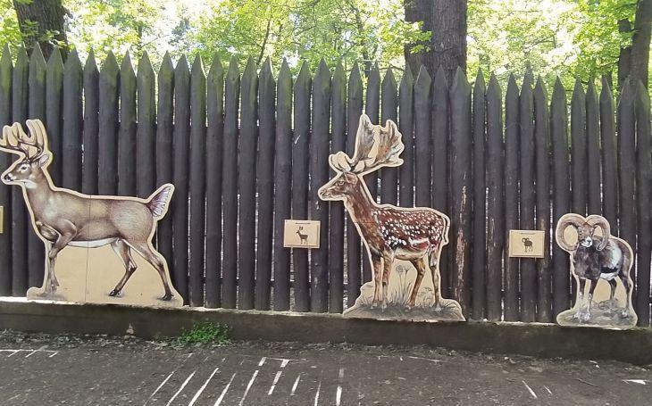 Pozdravte jelena, rysa či lišku. Velký výlet nejen pro malé s hádankami, zábavou i poznáním. Testováno na dětech
