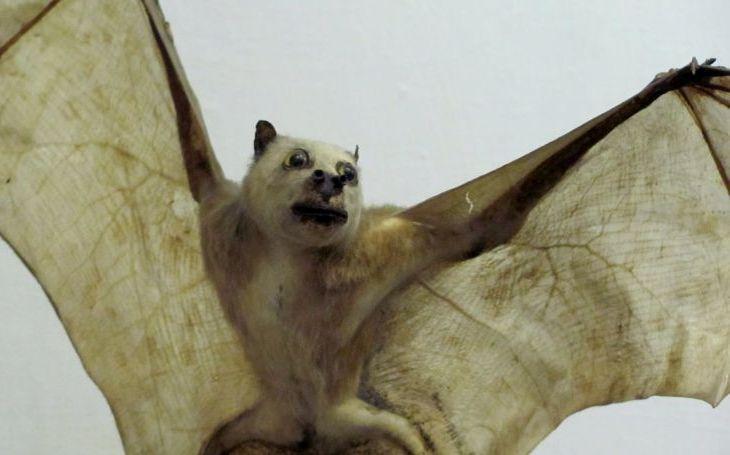 Drákulův upír a létající kočka straší počestné občany. Dobře utajené příšery - seriál Krajských listů, díl jedenáctý