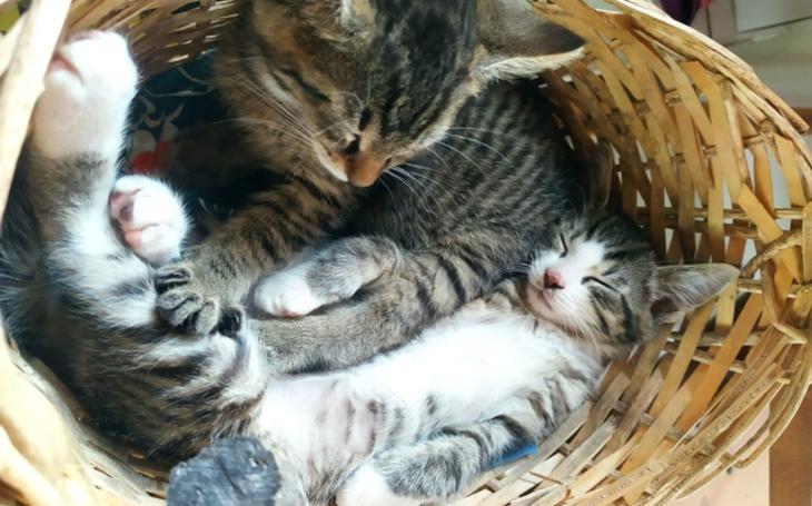 Pojmenoval jsem naše nové kotě Koudelka. Komentář Štěpána Chába