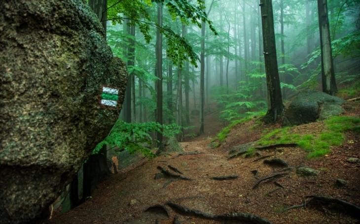 Nešlo tam kácet. A vznikla jedinečná ukázka nádhery přírody, kterou ocenilo i UNESCO zařazením na svůj seznam přírodních a kulturních památek