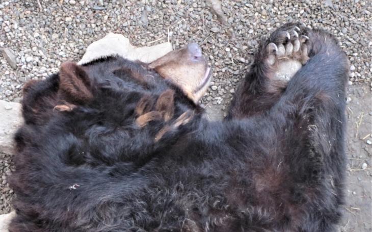 Obludný medvědí krkavec prý ulovil i bizona. Dobře utajené příšery - seriál Krajských listů, díl devatenáctý