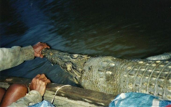 Krokodýlové jsou skuteční přežívající draci z pravěku naší Země. Dobře utajené příšery - seriál Krajských listů, díl dvacátý