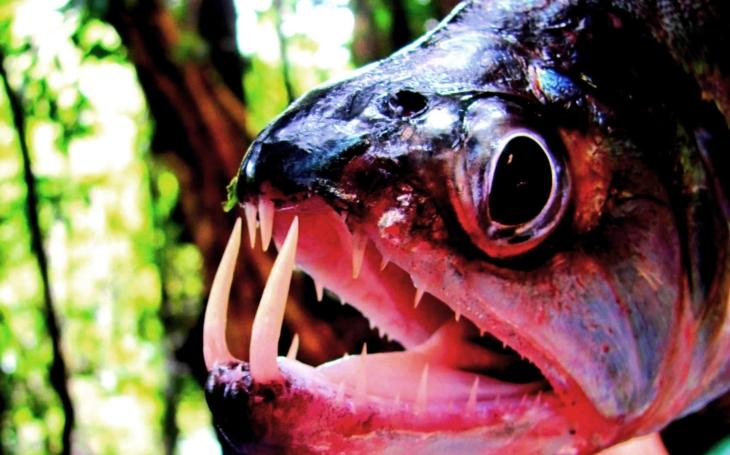 Amazonská cesta za Indiány a mýtickými netvory. S cestovatelem Vojtěchem Alberto Slámou potřetí do jižní Ameriky